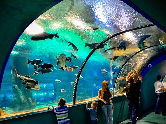 Океанариум Москвариум для детей Фото